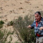 A Locust Plague, Shy of Biblical Proportions, in Israel