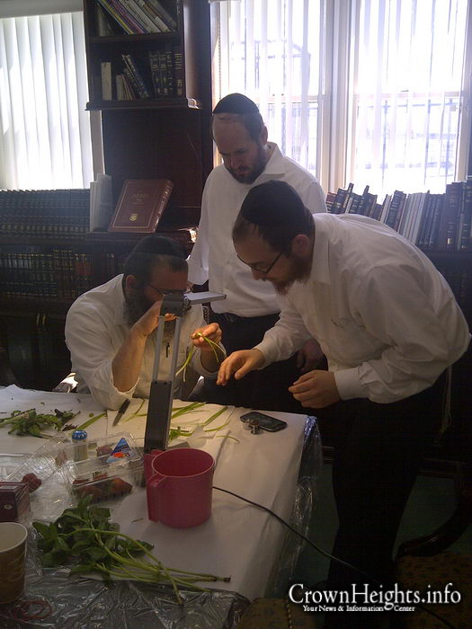 Ok kosher launches app for checking and cleaning produce for Kosher cleaning requirements