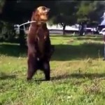 Video: The Real Dancing Bear?