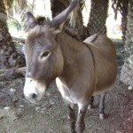 Authorities Save Abused Donkey in Kfar Chabad