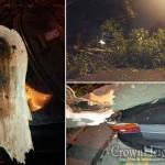 Fallen Trees Block Neighborhood Roads for Hours