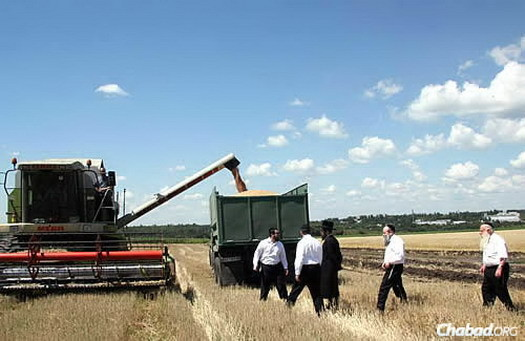 "Harvesting shmura, ""guarded"" wheat from fields surrounding Dnepropetrovsk to be ground into flour for matzah. Rabbi Mordechai Shmuel Ashkenazi, the longtime chief rabbi of Kfar Chabad who passed away in January, is on the far right. Rabbi Shmuel Kaminezki, the chief rabbi of Dnepropetrovsk, walks ahead of him."