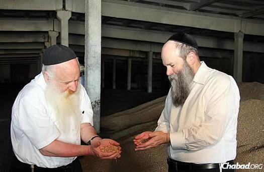 Ashkenazi, left, and Kaminezki examine kernels to ensure none are already sprouted.