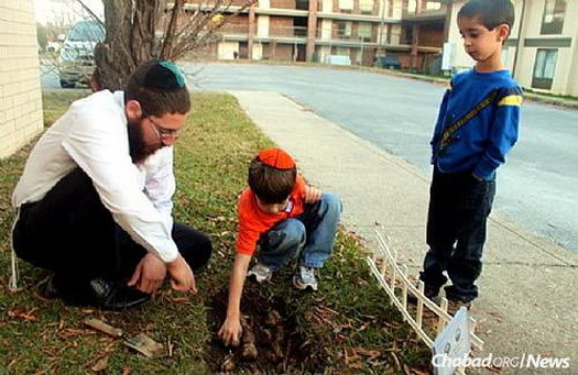 The rabbi plants daffodils with children as part of a memorial project.