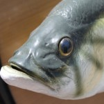Why We Eat the Head of a Fish