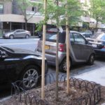 Brooklyn Residents Object to Mandatory Trees