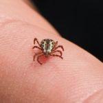 Rare Tick-borne Illness Confirmed in Upstate NY