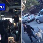 Outrage Over Bais Rivkah Drug-Sniffing Dog