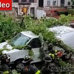 Tree Falls On Moving Car In Crown Heights